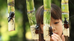 Rural children are enjoying fighting rhinoceros beetles. Stock Footage