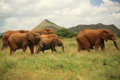 Seven elephants Stock Photos