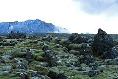 Resistant moss on volcanic rocks in Iceland Stock Photos