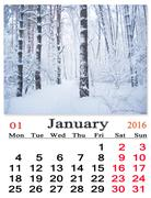 Calendar for January 2016 with birches in snow Stock Illustration