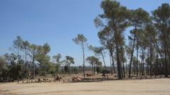 Tall Trees Near Wood Harvest Stock Footage
