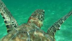 Sea wild tortuga turtle swimming underwater and emerges to breathe the air Stock Footage
