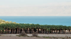Time lapse of shadows covering palm tree grove near Sea of Galilee. Cropped. Stock Footage