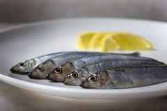 Fresh sprats fish Stock Photos