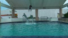 Dolphin jump coach over the water on show in the Dolphinarium - stock footage