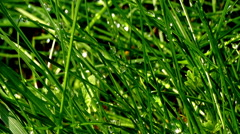 Morning dew on the green grass Stock Footage
