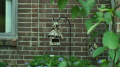 Home made birdhouse outside bird house Stock Footage