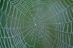 Spider web with morning dew Stock Photos