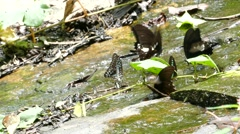 Butterfly on the rock at the waterfall. Stock Footage