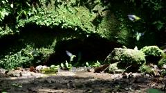 Exotic green birds in natural habitat Stock Footage