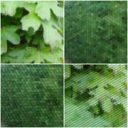Green leaves texture. Collection of abstract multicolored backgrounds. Natural Stock Illustration