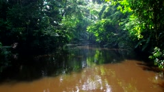 Moving up jungle river Stock Footage