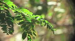 Green leaves on a tree branch in the forest, 4k Stock Footage