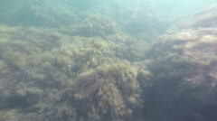 The seabed, underwater - stock footage