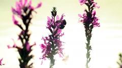 Sleeping Bee - Early Morning Stock Footage