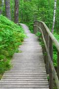 Wooden boardwalk with safety railing in summer forest Stock Photos