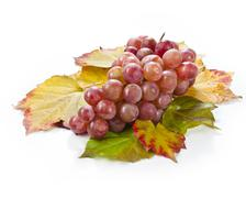 fresh red grape wine isolated on a white background decorated with autumn lea - stock photo