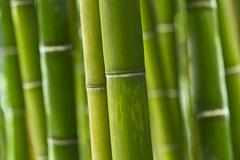 Natural fresh green bamboo stalk Stock Photos
