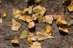 dry leafage on soil - stock photo