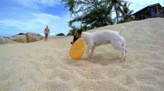 Happy Cute Jack Russel Dog Catching Frisbee on the Beach Stock Footage