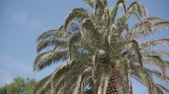 Palm tree at sunny day at summer holiday Stock Footage