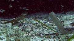 Sea Needle, Mediterranean Sea, Spain Stock Footage