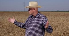 Proud Satisfied Wheat Crop Abundance Success Business Farmer Looking Around Land - stock footage