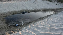 Garbage on a sea beach - stock footage