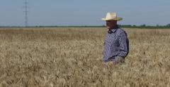 Satisfied Farmer Agricultural Producer Walk Looking Confident Ripe Wheat Culture Stock Footage