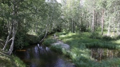 Forest creek and pond on a summer day in northern Sweden. Stock Footage