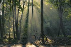Bicycle and mornin sunrays shining through trees Stock Photos