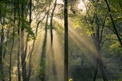 fantastic mornin sunrays shining through trees - stock photo