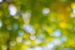 Lens blured natural background look from treetops forest Stock Photos