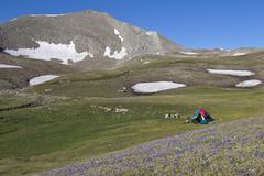 tent at Asian Caucasus, Azerbaijan with many blue flowers in front - stock photo