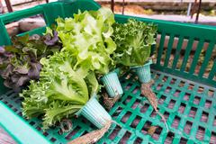 Hydroponic vegetable in basket - stock photo