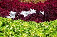 Stock Photo of Vivid Flower Bed