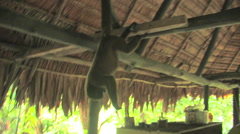 Small Monkey Haning from the Rafters in the Rainforest of Amazon Basin PERU Stock Footage