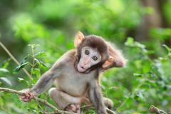 silly albino macaque in Hong Kong - stock photo