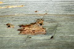 Detail of insect attack on old construction wood Stock Photos