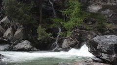 Rushing creek flows through the trees in  Gran Paradiso National Park Stock Footage
