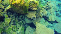 Iceland Silfra Thingvellir Tectonic Plates fault underwater - stock footage