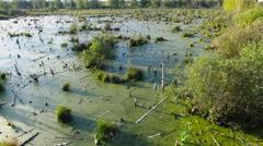 Marsh aerial view 4k Stock Footage