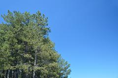 Conifer trees and blue sky Stock Photos