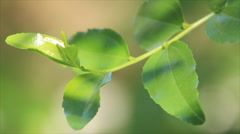 Green sprout in sunlight Stock Footage