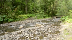 Small mountain river with lush green forest in Carpathians Stock Footage