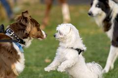 dogs who meet in a park - stock photo