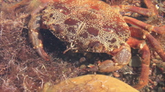 Sea crab Stock Footage