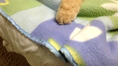Close up persian cat sleeping on bed Stock Footage