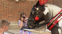 Black and white horse tied with reins in Krakow - stock footage