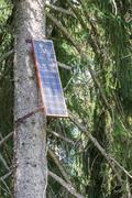 Solar panel attached to a large tree - stock photo